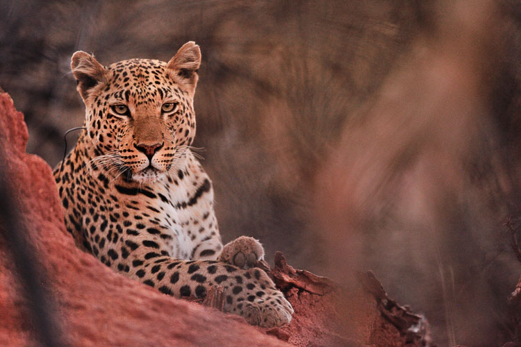 Africat Namibia