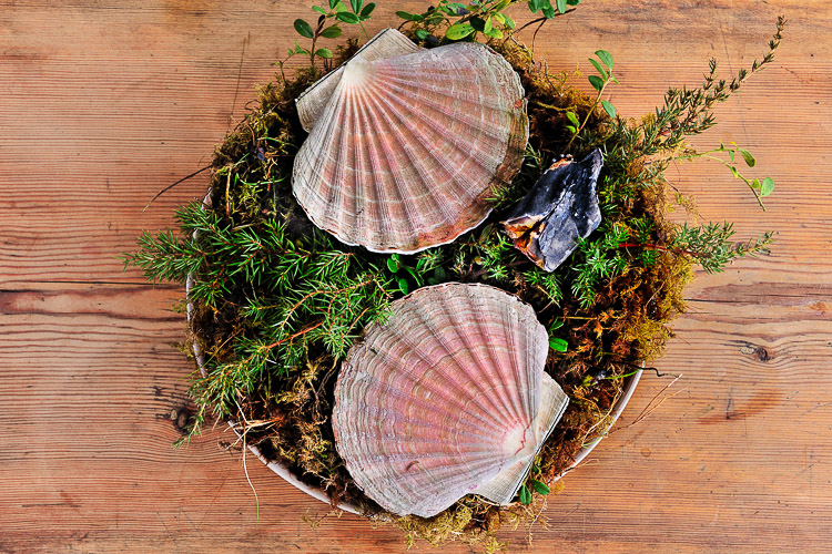Fresh scallops with burned juniper branches, Faviken, Magnus Nilsson