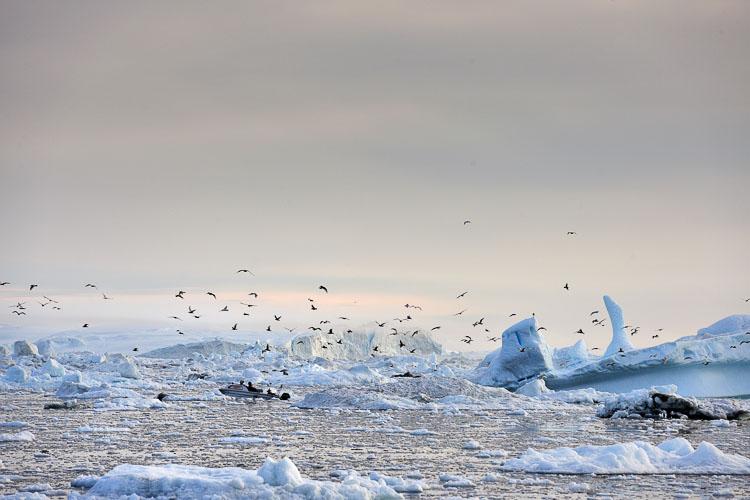 sailing to Ilulissat, Greenland
