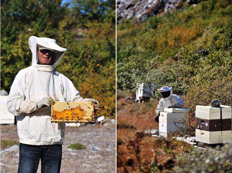 The Honey Maker, Narsarsuaq - Greenland