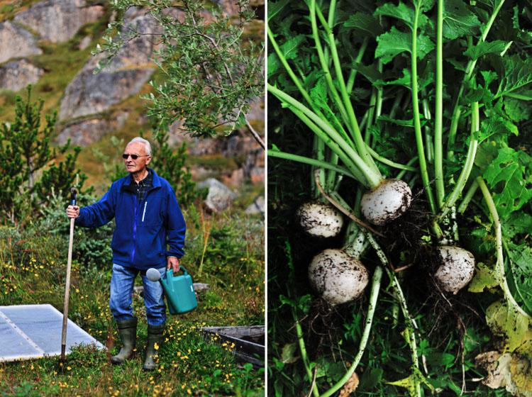 Micro Farming Greenland