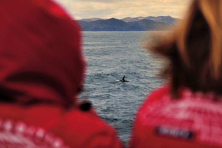 Orca watching in Glubokaya, Kamchatka, Ponant L'Austral